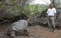 """Cụ rùa 100 tuổi cứu loài khỏi tuyệt chủng nhờ """"yêu""""... không biết mệt"""