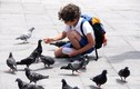 Cho chim ăn có mang tội hủy của hay không?