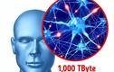 Giải mã 13 'siêu năng lực' kỳ diệu của cơ thể con người