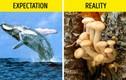 9 'sự thật' sai bét loài người vẫn tin sái cổ