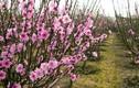 Ý nghĩa bất ngờ 9 loài hoa chơi Tết đuổi tà khí, hút tài lộc