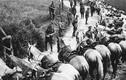 Ảnh: Các loài động vật bạo dạn chiến đấu trong Thế chiến 1