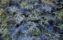 Chốn cổ tích mộng mơ của rừng ngập mặn nổi tiếng xứ Huế
