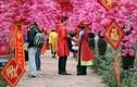 Người dân Hà Nội nô nức đến vườn hoa chụp ảnh Tết