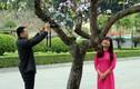 Ảnh: Người Hà Nội say sưa chụp ảnh hoa ban đẹp mê hồn