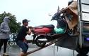 Dân hốt bạc nhờ cứu xe ngập nước trên Đại lộ Thăng Long