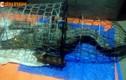 Hà Nội vào cuộc tìm kiếm cá sấu trên sông Tích