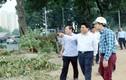 Chủ tịch Hà Nội kiểm tra đột xuất cây xanh đường Phạm Văn Đồng