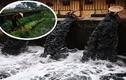 Hãi hùng người Hà Nội dùng nước ô nhiễm đen ngòm tưới rau