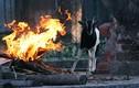 Ảnh: Công viên Thủ Lệ đốt lửa, che bạt sưởi ấm cho động vật