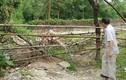 """Hai bé tử vong dưới hố nước ở Hà Nội: Phát hiện gây """"sốc"""""""