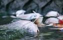Bao nhiêu cá ở hồ Tây đã chết vì thời tiết thay đổi?