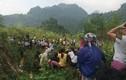 Hãi hùng phát hiện thi thể phân hủy dưới đèo Thung Khe
