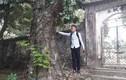 Dân làng sung sướng vì được bán cây sưa định giá 100 tỷ đồng
