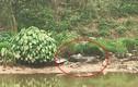 Hãi hùng phát hiện thi thể nam giới phân hủy mạnh trên sông Nhuệ