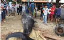 """Cá voi """"khủng"""" hơn 2 tấn, dài 6m dạt vào bờ biển Khánh Hòa"""