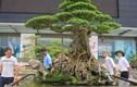 """Bí mật chưa từng """"khui"""" từ những cây bonsai đắt đỏ của đại gia Việt"""