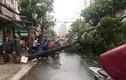 Đường ngập, cây bật gốc sau trận mưa lớn ở TP.HCM