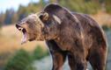 Video: Chú bé thoát nạn thần kỳ khi đối diện với gấu hoang