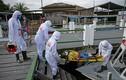 COVID-19: Brazil tăng vọt ca nhiễm và tử vong, Mỹ cắt quan hệ với WHO