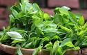 Ăn rau ngót không đúng cách bạn sẽ biến chúng thành thuốc độc