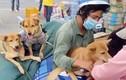 Yêu cầu báo cáo vụ tiêu hủy đàn chó của cặp vợ chồng về Cà Mau tránh dịch