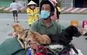 """Chủ nhân 16 chú chó, mèo: """"Chúng là con, là gia đình, tôi chỉ biết khóc!"""""""