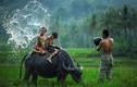 Sốt bộ ảnh đồng quê Malaysia đậm chất Việt Nam
