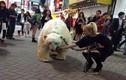 Náo loạn vì gái xinh dắt gấu Bắc Cực dạo phố