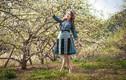 Lên ngay Mộc Châu mùa hoa mận để thấy xứ thần tiên là có thật