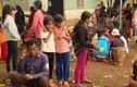 Gia Lai: Mổ bò làm đám tang, hơn 100 người cấp cứu