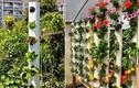 Mê mẩn ngắm những mẫu vườn đứng tuyệt đẹp cho nhà phố