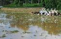 Hồ Xuân Hương bỗng nhiên cạn trơ và ngập rác