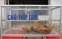 Nhịn cười không nổi khi đọc biển quảng cáo ở Việt Nam