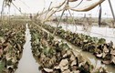 Ảnh: Xót xa vùng rau lớn nhất Lâm Đồng tan hoang sau lũ
