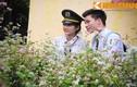 Hà Nội: Người dân thích thú ngắm hoa tam giác mạch trên phố đi bộ