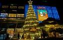 Chiêm ngưỡng những cây thông Noel đẹp độc lạ ở Hà Nội