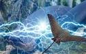 Kỳ lạ 5 loài vật nhỏ bé phóng điện giết được cả cá sấu