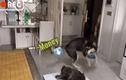 Video: Choáng ngợp chú chó Husky biết nhận hàng và thanh toán tiền cho shiper