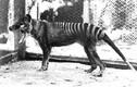 6 sinh vật huyền thoại xóa sổ khỏi Trái Đất do loài người