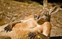 Thêm những khoảnh khắc động vật giống con người đến kinh ngạc