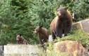 Bị phạt 1,4 tỷ Đồng vì cho gấu đen ăn 180 quả trứng!