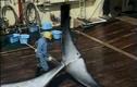 """Bí mật một chuyến săn cá voi """"chui"""" tại Nhật"""