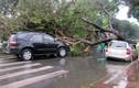 Cây bật gốc đổ la liệt trên đường TPHCM vì mưa bão