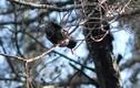 Kỳ thú công viên chim quý giữa Đại học Đà Lạt