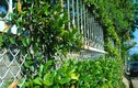 Bờ rào đẹp như tranh của nhà Đà Lạt