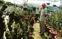 Đột nhập vườn lan quý vô giá giữa Sài Gòn