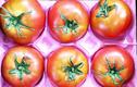 Cà chua Hoàng gia Nhật 1,6 triệu/kg hút hồn nhà giàu Việt