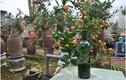 Độc đáo quất cảnh trồng trong chai thủy tinh ở Tứ Liên