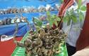 2 củ sâm Ngọc Linh hàng chục năm tuổi được rao bán hơn 1 tỷ